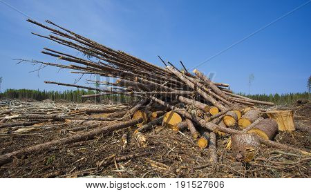 Pile of logs in a big logging operation in Sasktachewan Canada