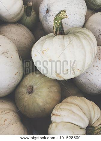 white pumpkin in pile for halloween or november fall harvest