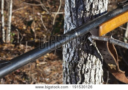 Rifle with a wood stock using a branch to steady for a long shot