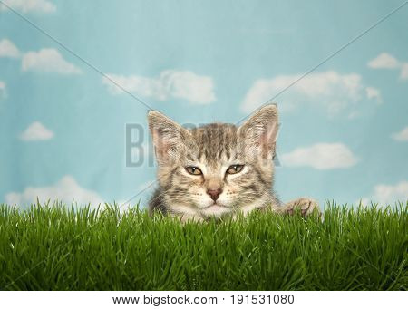 Small tired tabby kitten laying down in tall green grass looking at viewer. Blue background sky with clouds