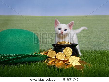 Small white kitten standing behind leprechaun pot of gold next to green hat in grass field of grass in background to sky line. Fun Saint Patrick's day theme with animals.
