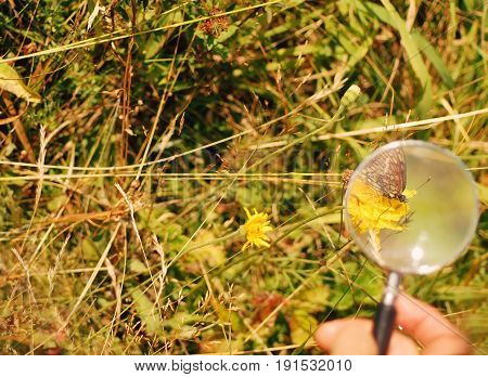 Butterfly in a field of grass and flowers under a magnifying glass
