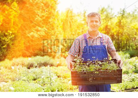Portrait of confident man holding crate of potted plants at garden