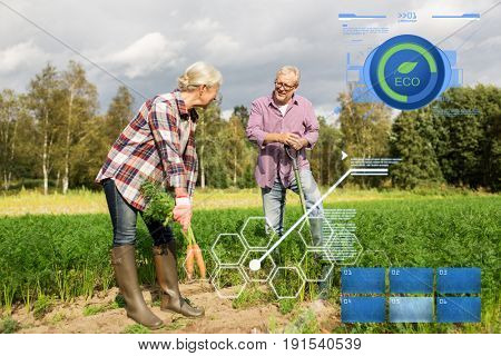organic farming, agriculture and people concept - senior couple with shovel picking carrots at farm garden