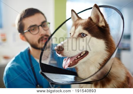 Veterinarian and his patient with protective collar