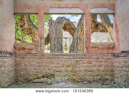 Old cottonwood tree in a desert canyon as seen through windows of a ruined ghost town building