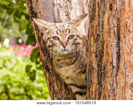 Gray striped kitten sitting on the tree trunk.