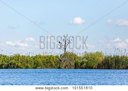 Beautiful landscape photo of Danube Delta in Romania