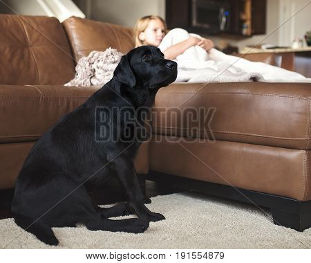 Black Labrador Retriever with little girl watching television.