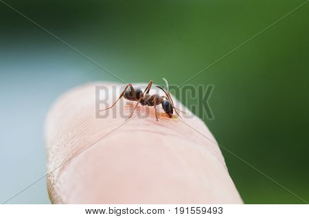 funny and dangerous ant crawling on the skin of the hands