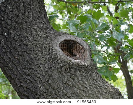 hole in the tree A big hole in the tree usually serves as a house for birds or other animals