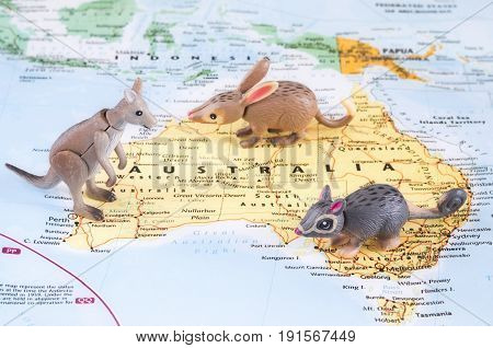 A photo of toy Australian animals on the map.