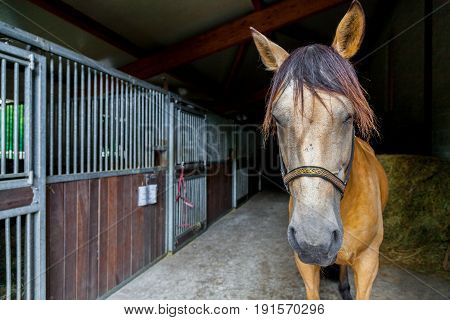 a brown horse stands in a barn
