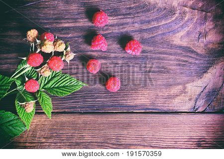 Branch with ripe and unripe raspberry with green leaves empty place on the right vintage toning