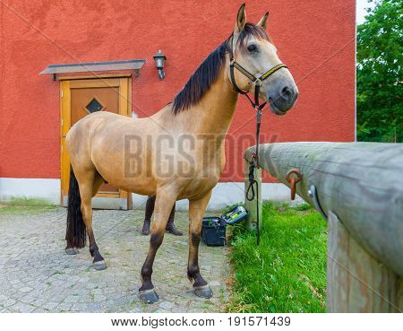 a brown horse stands on a farm