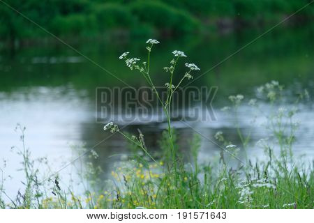 River coast - out of focus - Troitskoye - Moscow region