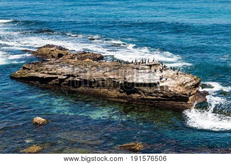 Cormorants resting on a natural rock formation at La Cove in San Diego, California.