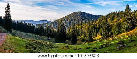 Valley With Forest In Mountains Of Romania