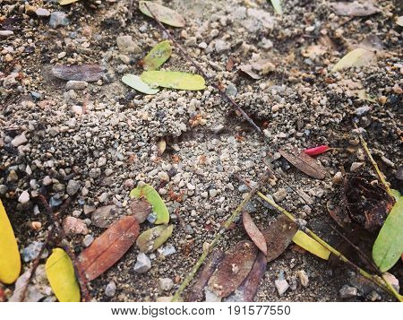 Ground with ants excavate nests, ant nest.