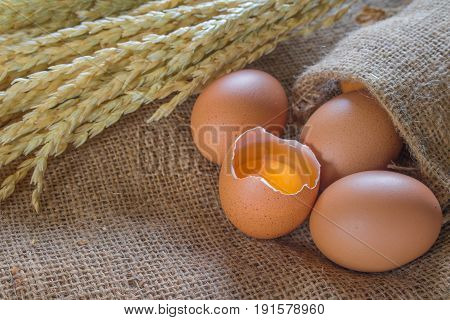 Fresh farm eggs ; egg chicken .