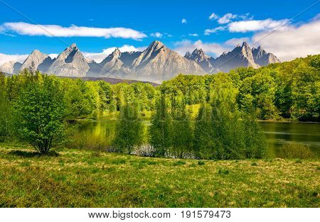 Trees Near The Lake In High Tatras