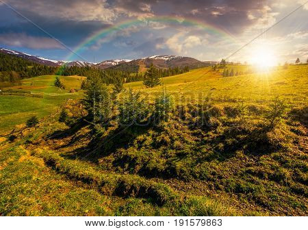 carpathian mountain ridge with snowy peaks. Grassy alpine meadow with spruce forest in spring season under the rainbow. Fine weather with blue sky and some clouds on sunny sunset