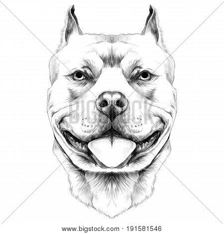 bull drawing images  illustrations  u0026 vectors  free