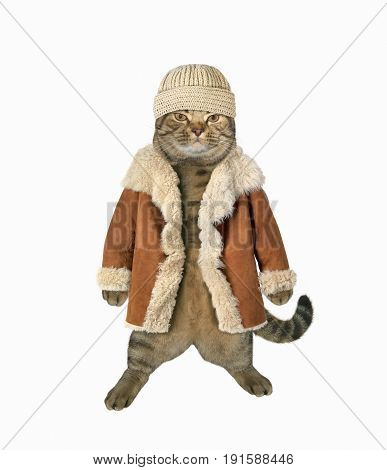 The cat is wearing a hat and winter coat. White background.