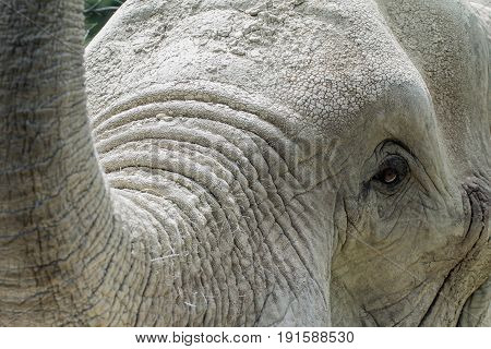 Portrait of an elephant in a german zoo