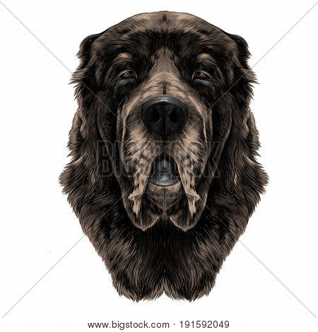 dog head brown wool breed Alabai or the Central Asian shepherd dog full face symmetry sketch vector graphics color picture