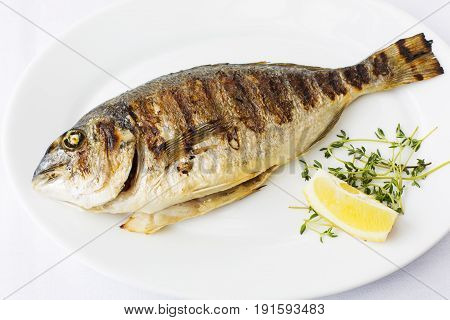 Grilled Fish, Sparus Aurata Fish On White Background At Restaurant