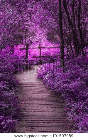 Beautiful Surreal Purple Landscape Image Of Wooden Boardwalk Throughforest In Spring