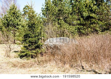 Large Stone In  Meadow
