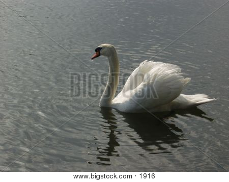 Swan 935