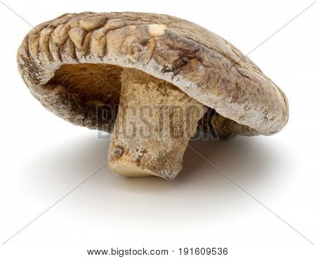 Dried Shiitake Mushroom isolated on white background