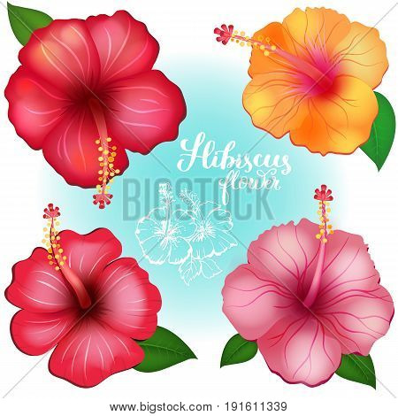 Set of three colored exotic flowers Hibiscus with modern hand drawn lettering