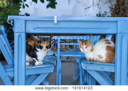 Two cute cats sleeping on wooden chairs under a blue painted wooden outdoor table in KalkanTurkey sheltering in the shade from the Mediterranean sun.