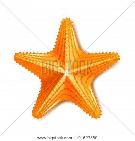 Starfish isolated on white photo realistic vector illustration