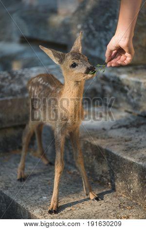 Zookeeper feeding baby animal
