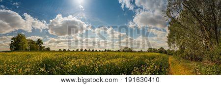 Panorama blossoming rape field and cloudy sky in springtime