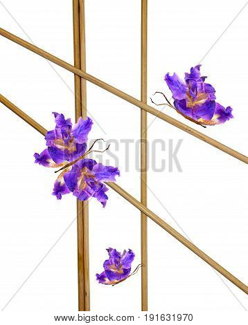 Floral Butterfly Made Of Flowers On Bamboo Sticks Lined  Frame
