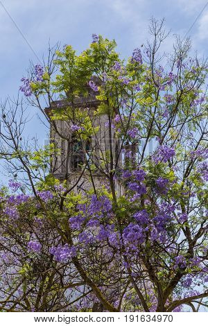 Jacaranda On Background A Building And Sky