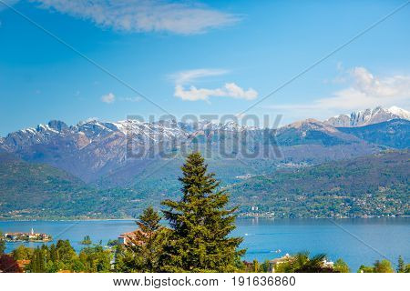 High spruce on the background of an Italian village standing at the foot of the Alps with snow-capped peaks