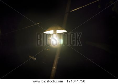Insects flying around a light bulb, Thailand