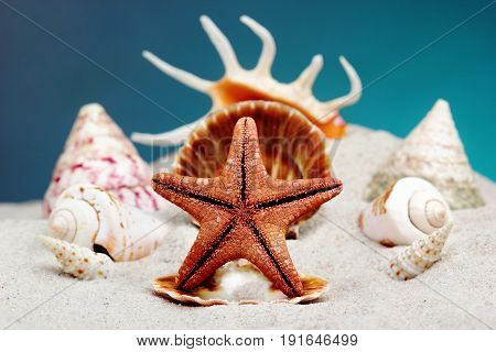 Red Starfish On A Seashell. Like Throne Of Sea King.creative Background.conept Of Summer