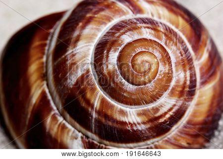 Texture Of The Seashell.concept Macro Shot Of Seashell Texture