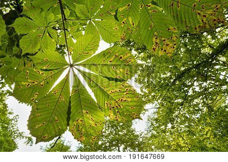 View from the bottom of the tree leaves in the park.