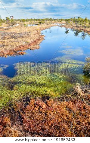 Beautiful waterscape in the swamp. Beautiful bog, colorful view. Breath of the swamp. Beautiful swamp. A wonderful walk in nature.