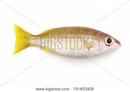 Bigeye Snapper fish isolated on white background