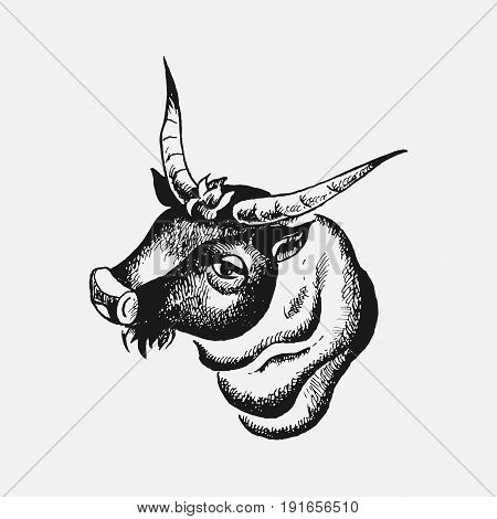 bull's head drawn by hand zodiac sign farming livestock